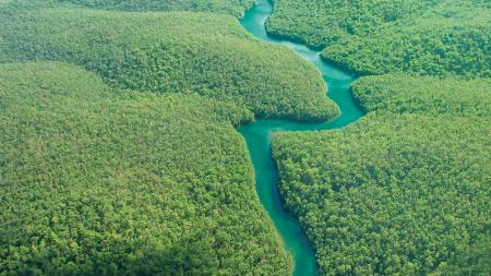 Aerial view of dark green forest and sparkling blue water.