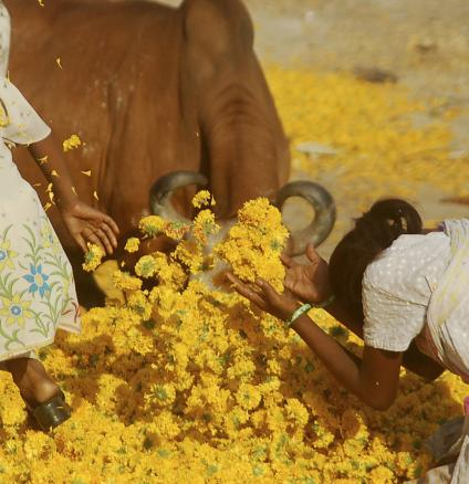 Indian children playing and praying with yellow flowers.